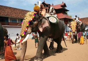 Caparisoned elephants during Sree Poornathrayesa temple festival, Thrippunithura, Kerala, South India.
