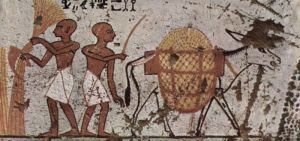 Donkey in an Egyptian painting c. 1298-1235 BCE, from Wikipedia